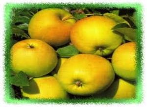 Appel Lombarts appel