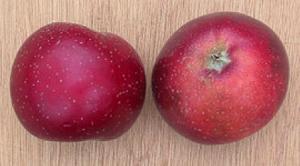 Appel Sterappel appel