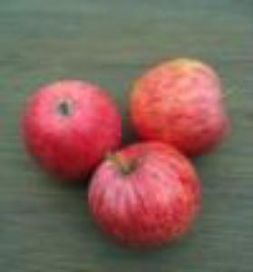 Appel Zijden H. appel